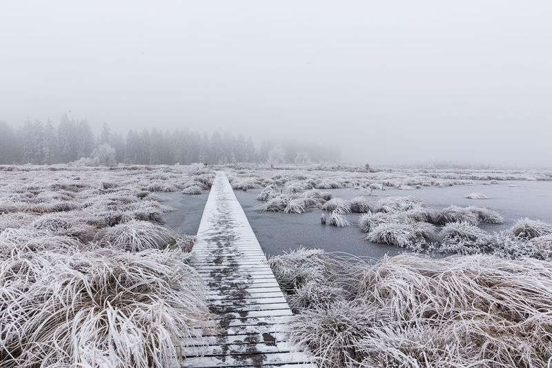 Frozen boardwalk by plants during foggy weather
