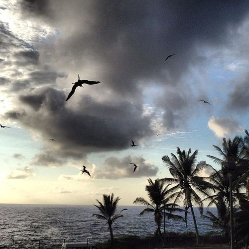 Early morning birds glide over the pool Christmasisland