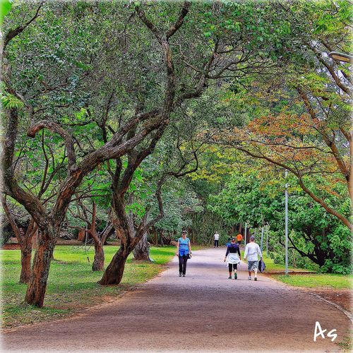 Parque do Ibirapuera - São Paulo Tree Men Walking Park - Man Made Space Person Lifestyles Nature Eye4photography  Beauty In Nature Trees And Leaves Treescollection EyeEm Nature Lover
