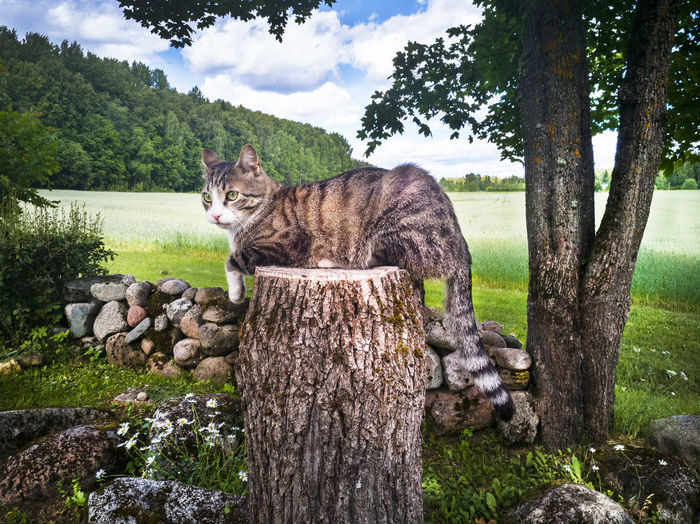 Cat sitting on tree trunk Animal Themes Beauty In Nature Cat Cloud - Sky Country Life Countryside Day Domestic Animals Grass Green Color Growth Homestead Looking At Camera Nature No People One Animal Outdoors Pets Sitting Sky Tree Tree Trunk
