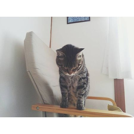 今朝もここで寝ていた。 おはようございます とお辞儀をしていたのでパチリ。笑 . 朝から天気悪くて、肌寒いから何だかやる気スイッチ入りにくいけど、ガンバロー...☂ ねこ部 猫 猫さんとの生活 にゃんだふるらいふ ねこkintarou nekostagram cat_stagram ig_cat ig_neko vscocatvscocam 金太郎 3歳おじぎ おうちねこ animals_cuts world_kawaii_cat