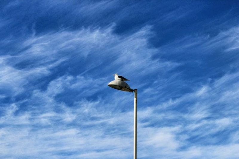 Low angle view of bird perching on bare tree against clear sky