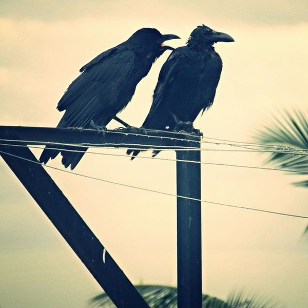 Beautiful Morning Rainy Cold Crow Angrylook Attitude Myclicks Camclick Shaukbahutbadicheezhai