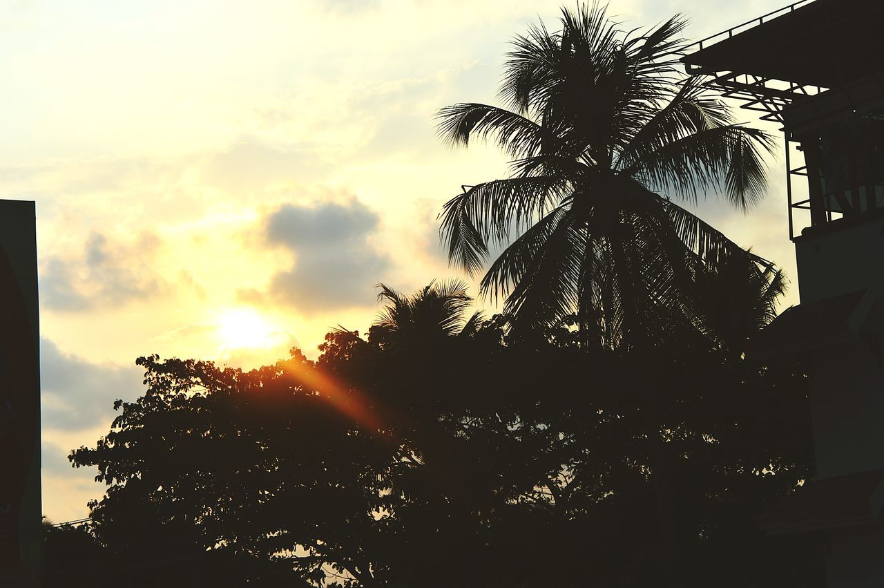 palm tree, tree, sunset, silhouette, sky, nature, growth, beauty in nature, no people, low angle view, tranquility, scenics, outdoors