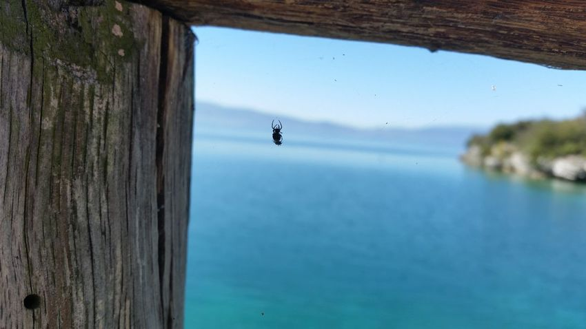 Spider Insect Nature Horizon Over Water Spider Eating EyeEm New Here New Eyeem First Eyeem Photo Water Sea Lake Lake View EyeEmNewHere Beauty In Nature No People Nature Outdoors City On Water Ohrid GalaxyS5