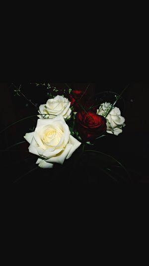 Rosen ❤️ Flower Rose - Flower Petal Bouquet Flower Head Fragility No People Studio Shot Freshness Celebration Black Background Indoors  Beauty In Nature Nature Food Close-up Day Rosé Rosen