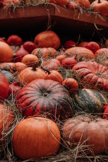 Thanksgiving holiday. halloween. lots of orange pumpkins in a hay. farmer's market. autumn harvest.