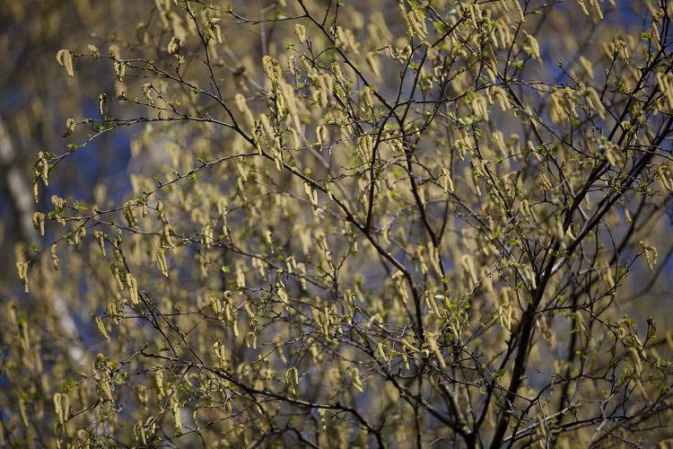 Full frame shot of fresh flower tree