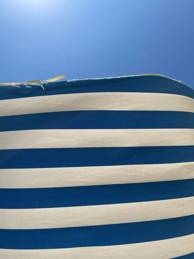 Low angle view of zebra against blue sky