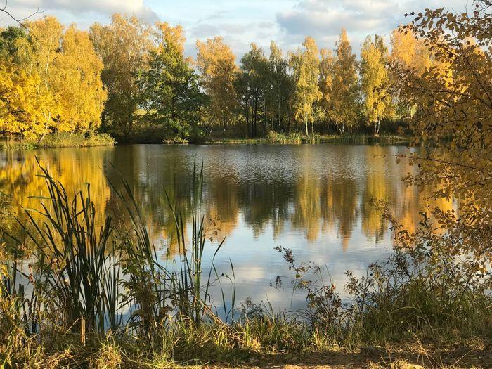 Yellow Tree Reflection Lake Water Nature Beauty In Nature Scenics Autumn