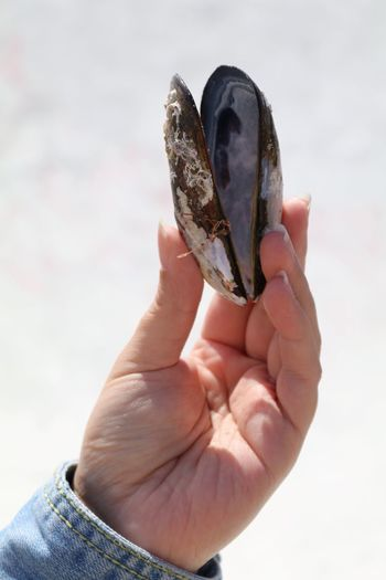 Close-up of human hand holding animal shell