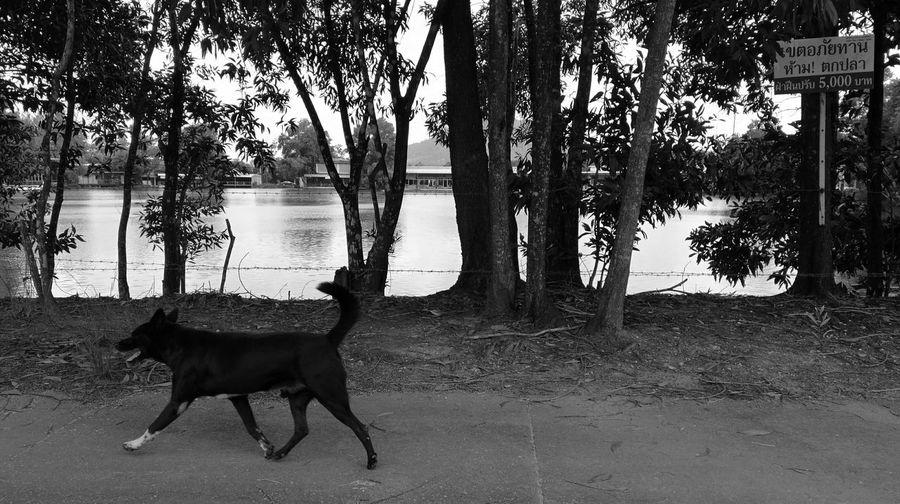 Dog Blackandwhite Tree Black