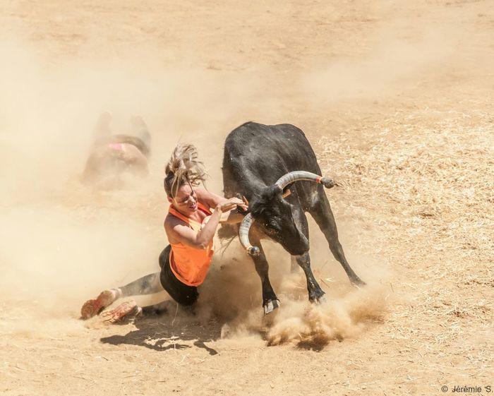 Tumade Sport Taureau arènes mont de marsan Mounride