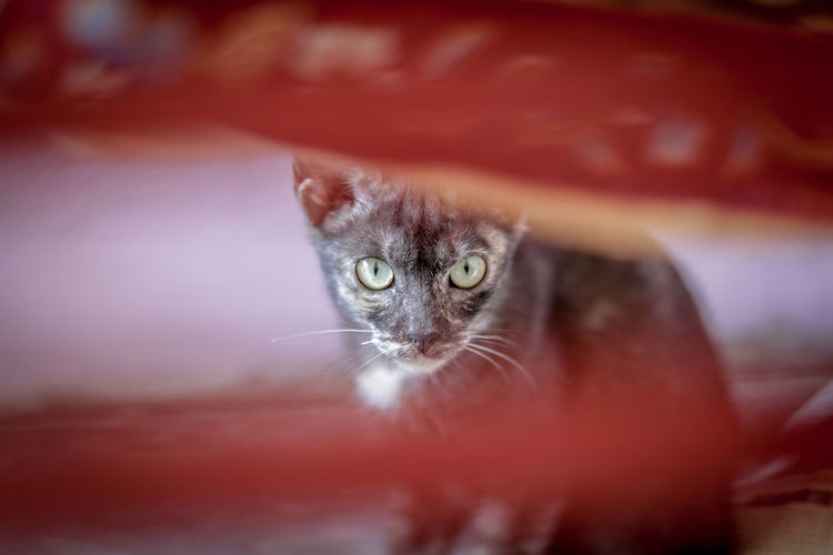 Portrait of cat looking through object