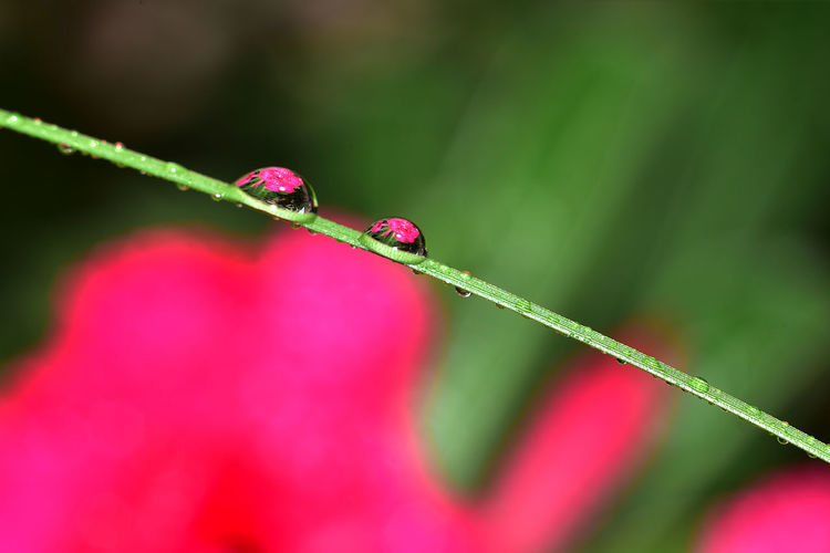 Close-up of dew drops on red plant