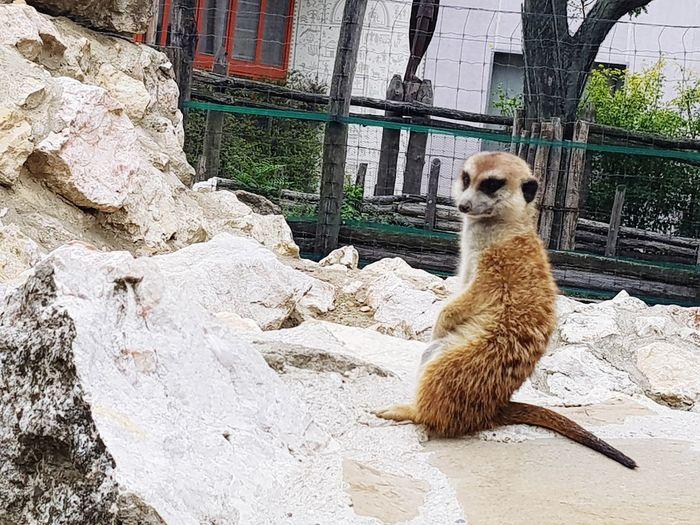 Animal Themes Day Budapest Zoo Szurikáta No People Outdoors Nature