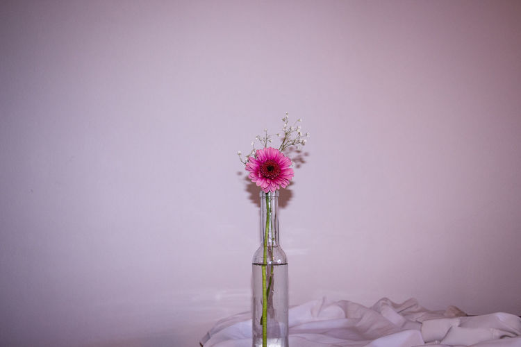 Close-up of pink flower vase against white background