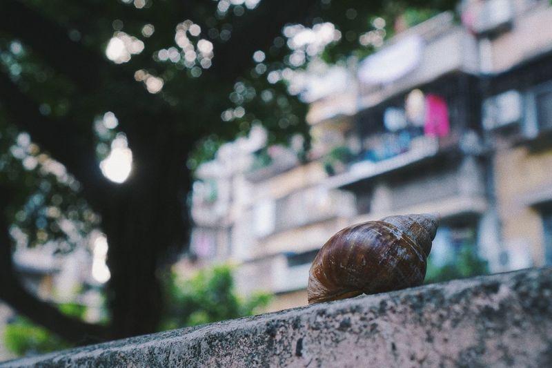 蜗居 China A6300 Guangzhou City 35mm