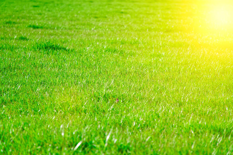 Grass Green Color Backgrounds Plant Nature Full Frame Field Land No People Playing Field Sunlight Beauty In Nature Environment Sport Tranquility Outdoors Growth Landscape Lawn Day Springtime Bright