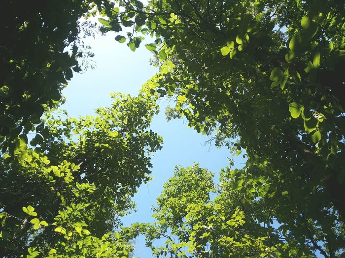 sleep and turn on the light. Relaxing Natural In Chiangmai Thailand Trees My View