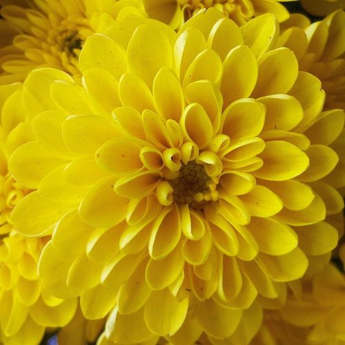 Flor amarela. ----------------------------------------------------------- WWW.ZOOMMULTIMIDIA.COM.BR ------------------------------------------------------------ Cerveja Cervejaria Beer Cervejacaseira houston usa beach vinho vino wine vin wyn wein brazil cervejadaboa ranimiro queijo cheese formaggio motocross parapente paraglider millerhighlife harleydavidsoncycles trem vinhodobom flor flower flores ----------------------------------------------------------- WWW.VINHODOBOM.COM.BR