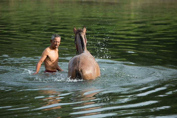 Early morning undentified of people bahte horse in a river as routine care of her horse Animal Beauty In Nature Green Color Horse Kota Belud Lake Malaysia Nature Person River Sabah Borneo Scenics Splashing Swimming Water