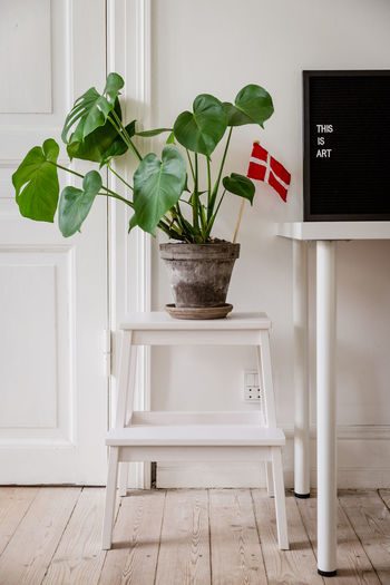 Potted plant on stool against wall at home