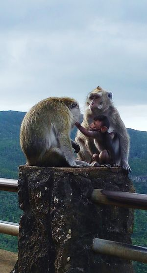 Animal Themes Mammal Animals In The Wild Animal Wildlife Group Of Animals Emotion Beauty In Nature Primate Cute Animals Monkey Family Love Bonding Animals In The Wild Family Bonding Time  FamilyTime Protecting What We Love Tranquil Scene Landscape Forest Monkey Love Nature LoveNature