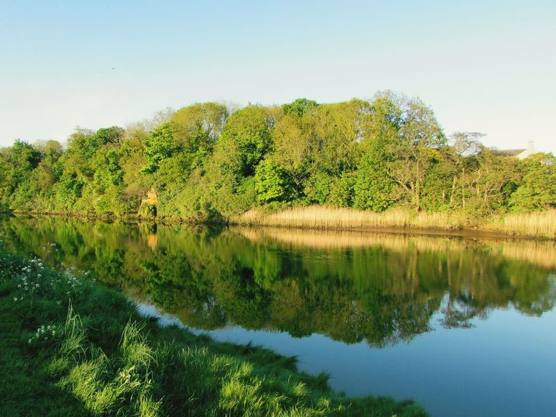 River Coquet Northumberland Scenic Calm Water Reflections Tree Water Lake Rural Scene Reflection Sky Grass Landscape Green Color