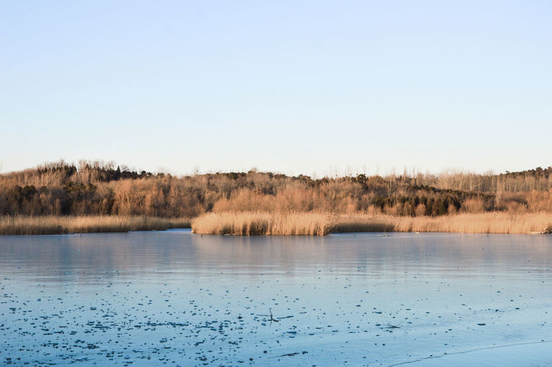 Olympic Park winter Beauty In Nature Blue Clear Sky Copy Space Day Growth Lake Landscape Nature No People Outdoors Scenics Sky Tranquil Scene Tranquility Tree Water Wetland Wilderness Area