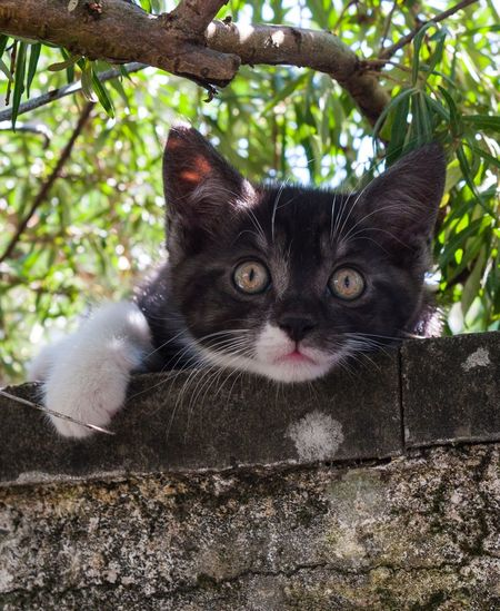 My Name is Humboldt, the most adventurous cat ever Kitten Kittens Mammal One Animal Tree Looking At Camera Cat Domestic Vertebrate Domestic Cat Whisker Animal Eye Domestic Animals Pets Portrait