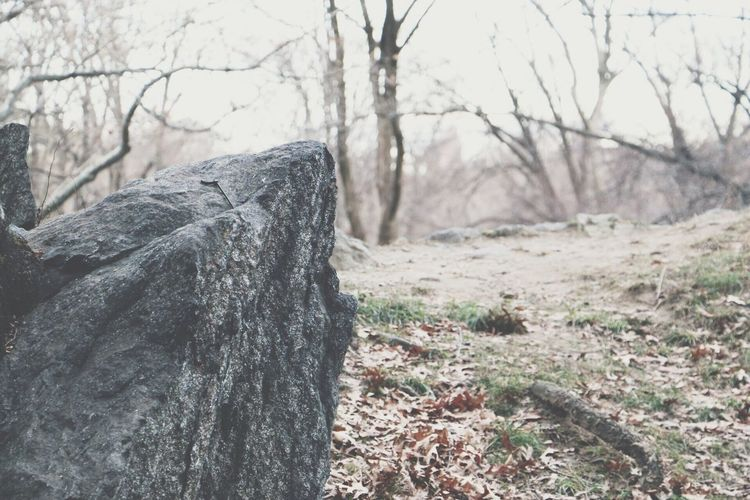 Tree Trunk Tree Bare Tree Nature Close-up Outdoors No People Day Scenics EyeEm Gallery Travel Traveling Canonphotography Throughmyeyes Rock Rock - Object Rocks Park
