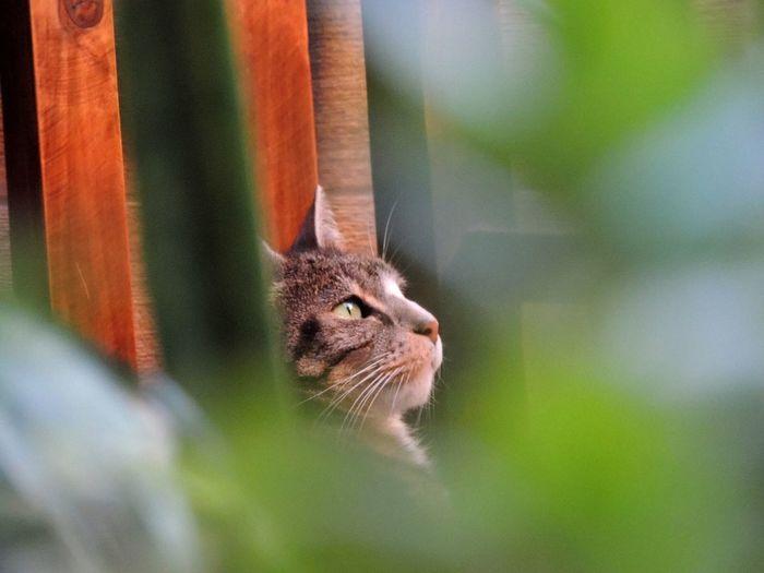 Rayitas Kitten Nikon Coolpix P510 Cat Rayitas Green Eyes Cute Sweet Cat Close-up