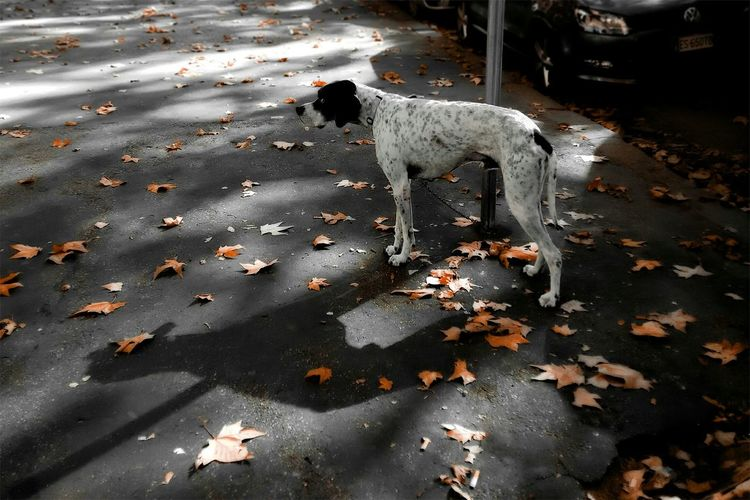 Walking Around From My Point Of View Autumn Leaves Waiting Dog Animals Dogs Of EyeEm Capture The Moment Fidelity  Streetphotography