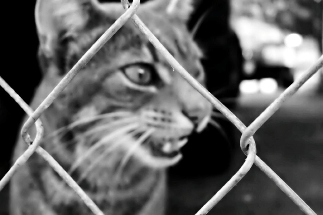 one animal, animal themes, domestic cat, mammal, metal, domestic animals, pets, close-up, feline, focus on foreground, outdoors, no people, day
