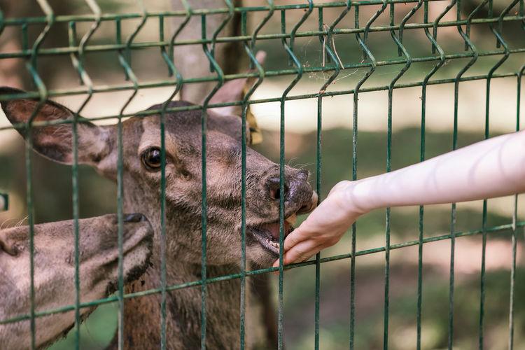 Deer in a zoo