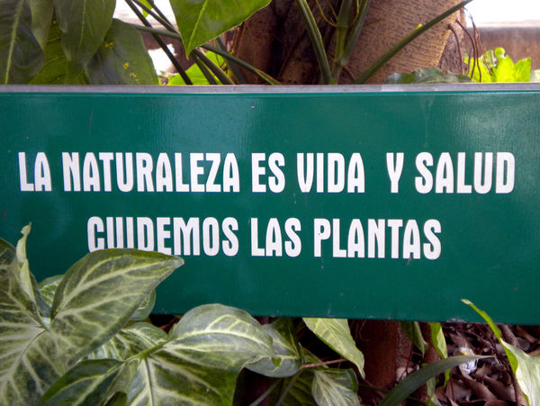 Advice Ecologic Green Color Leaf Nature Plant Sign Spanish Tipography
