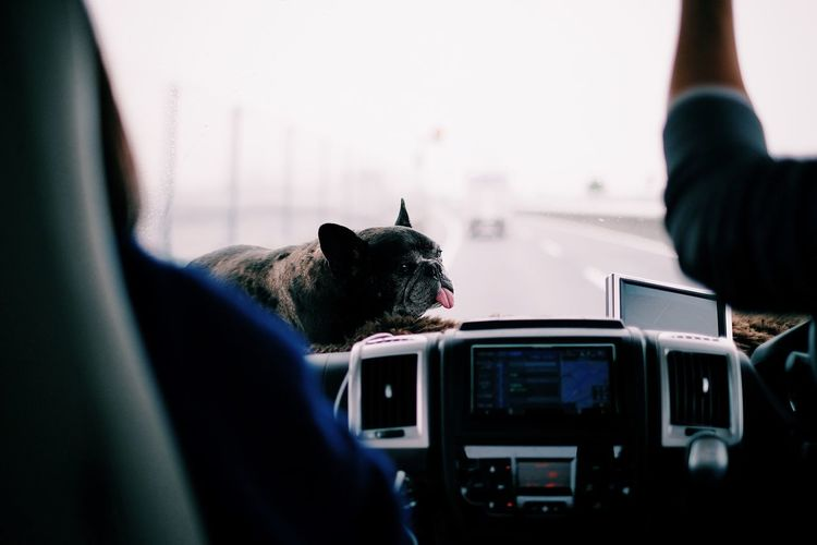Animal Themes Car Close-up Day Dog Domestic Animals Domestic Cat Feline Indoors  Land Vehicle Mammal One Animal One Person People Pets Real People