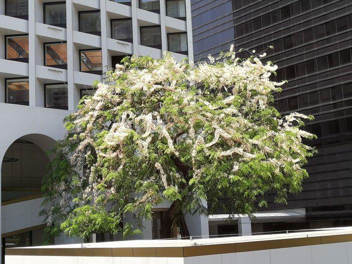 City Flower Modern Window Architecture Building Exterior Built Structure Plant