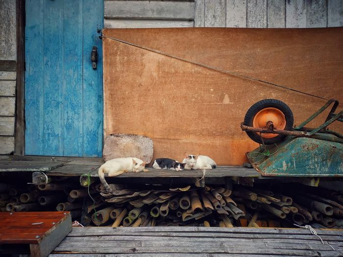 Cats relaxing against house