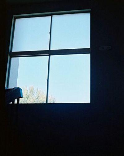 Portra400 Olympus倶楽部 Olympuspeneed Myolympusstyle Film Filmphotography Filmcamera オリンパス倶楽部 オリンパスペンEED フィルム写真普及委員会 フィルム写真 フィルムに恋してる Kodak フィルム ふぃるむカメラ フィルム部 ハーフサイズカメラ 写真好きな人と繋がりたい ファインダー越しの私の世界 カメラ好きな人と繋がりたい カメラ日和 お写んぽ コダック ポートラ400 Halfsizecamera bluesky window オリンパスPENEED