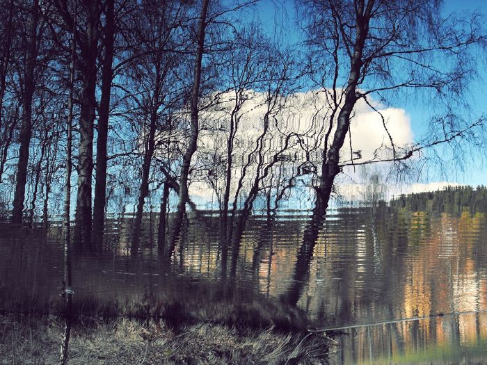 Bare trees by lake