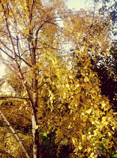 Yellow tree against sky during autumn