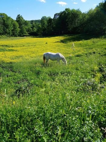 Green Color Animal Themes Grass Nature Outdoors Growth Field One Animal Tree Day Mammal Horses Of Eyeem White Horse Portrait Miniature Horse Pony Meadow Flowers Domestic Animals No People Pets Beauty In Nature Freshness Sky Pet Portraits Paint The Town Yellow