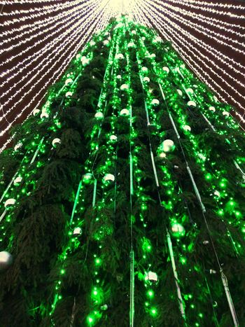 Cristmass tree Green Color Low Angle View Growth Tree No People Nature Outdoors Christmas Decoration Beauty In Nature Day Sky Christmas Tree