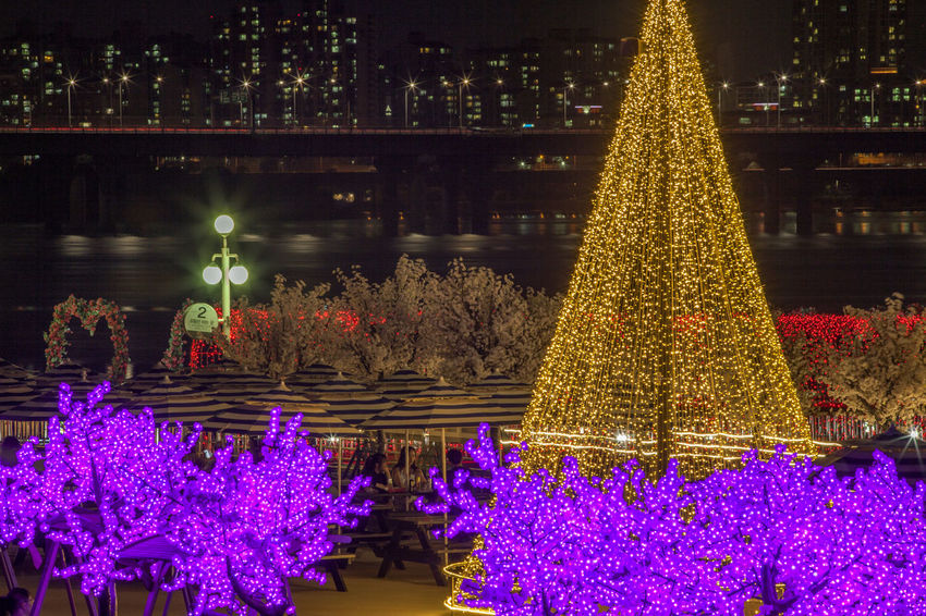 Architecture Beauty In Nature Decoration Flower Flower Head Fragility Freshness Growth Hagang Han River Han River Bridge Illuminated Multi Colored Nature Night Night View No People Outdoors Petal Pink Color Plant Purple River Riverside Yeouido Hangang Park