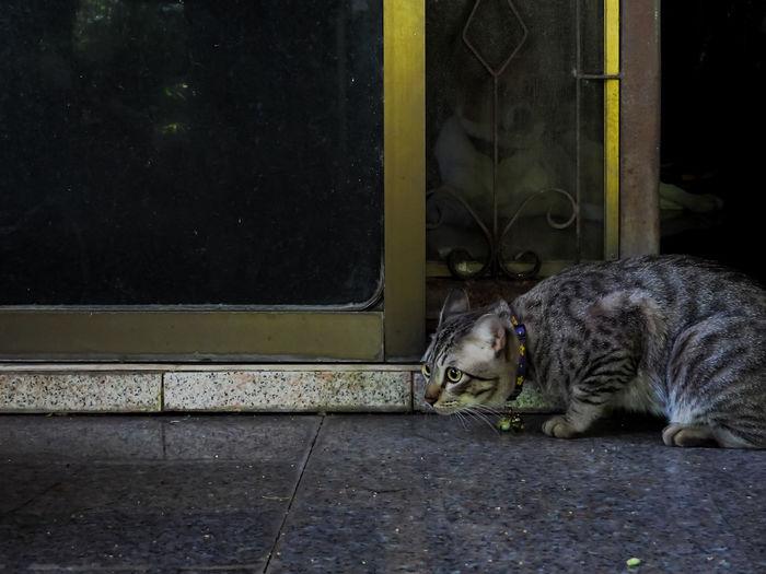 Portrait of a cat sitting on window
