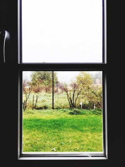 Fenster zum Garten Window Grass Field Tree Growth No People Green Color Day Indoors  Nature Clear Sky Close-up