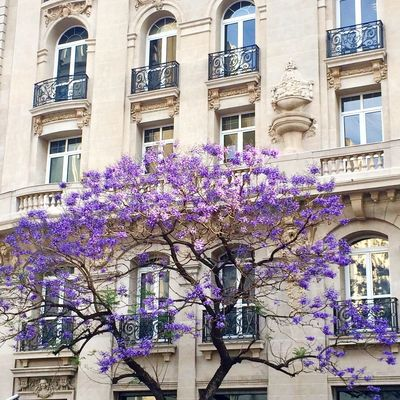 Architecture Building Exterior Built Structure Flower Low Angle View Window No People (null)Jacaranda Jacaranda Tree Architecture_collection Windows Purple Flower Getting Creative Getting Inspired Fragility Day Growth Tree Branch Outdoors City Freshness Nature Close-up