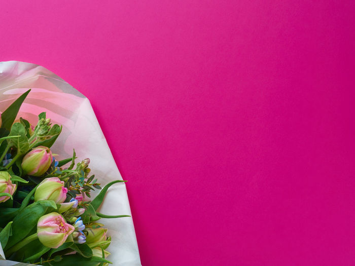 Close-up of rose bouquet against pink wall